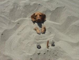 Beach-Dog-172