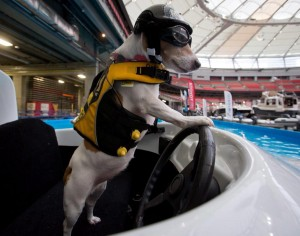 dog-drives-boat